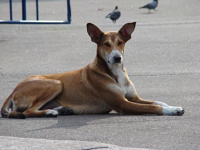 stray dog burnt ukraine euro 2012