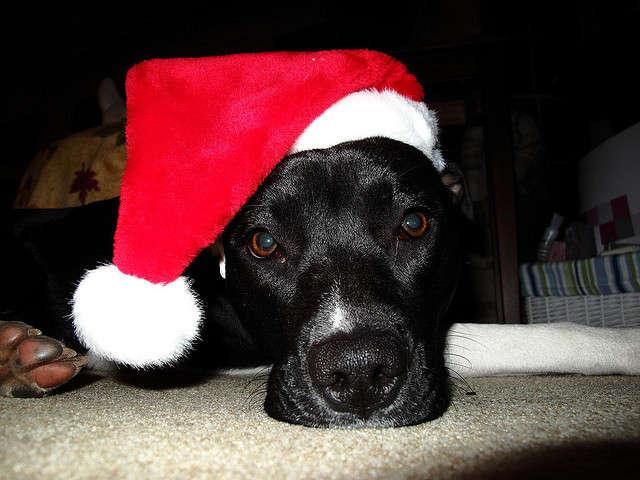 Holidays Adopt a Dog