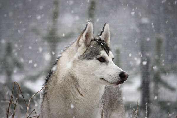 Natural Winter Care Tips for Your Dog or Cat