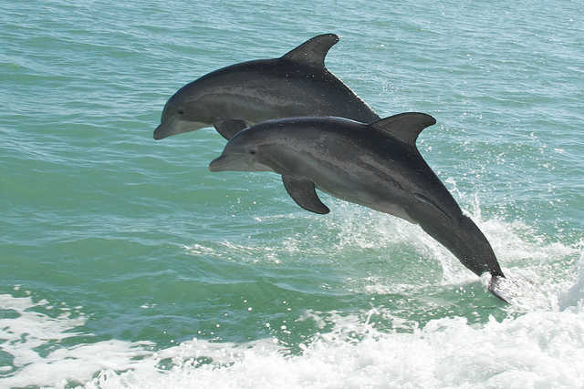 Dolphin and Whale Consumption on the Rise in Poorer Countries