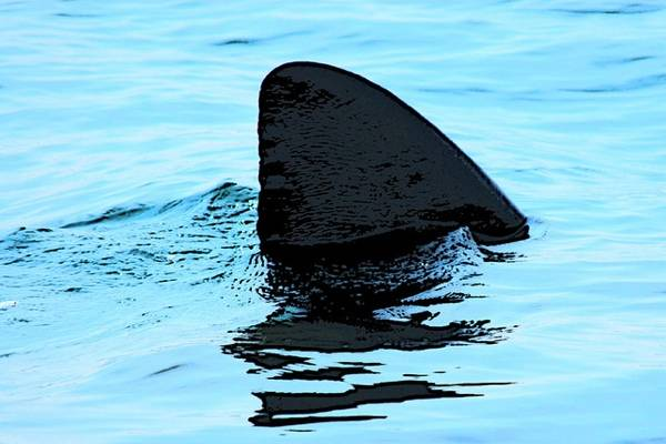 New York to Ban Sale of Shark Fins