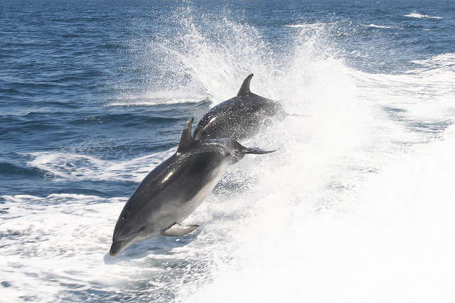 New Study Reveals Dramatic Sexual Complexity in Dolphins