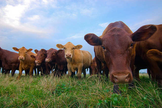 Organic Meat Doesn't Mean Humane