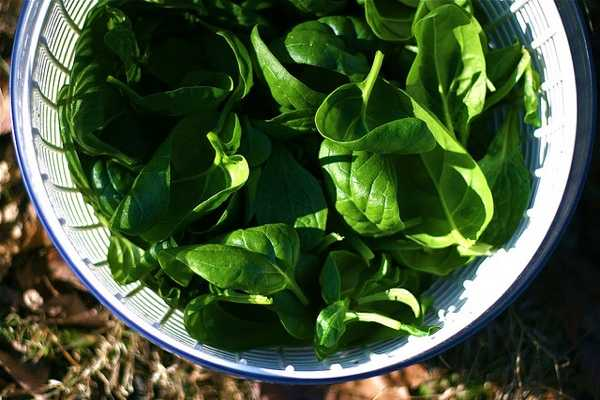 Spinach: Health Benefits, Tips and Recipes