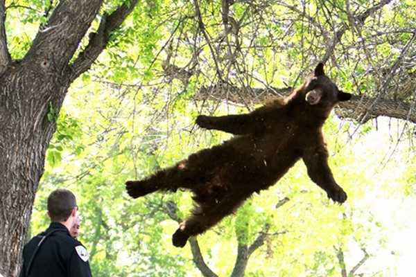 WATCH: It's A Bird! It's A Plane! It's A Flying Bear!