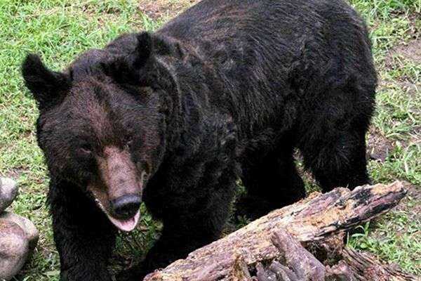 Oliver: A New Life For a Broken Bear