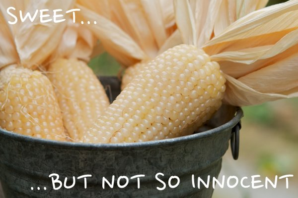 Company Charged for Covering Up Animal Deaths from GMO Corn
