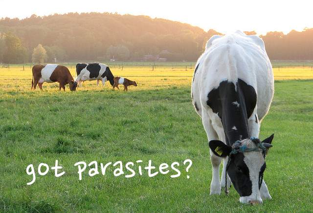 Organic Meats May Have Higher Parasite Risk