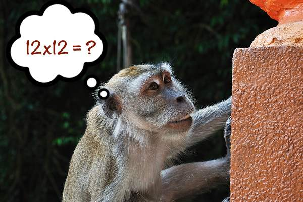 My Monkey Is Smarter Than Your Honor Student!