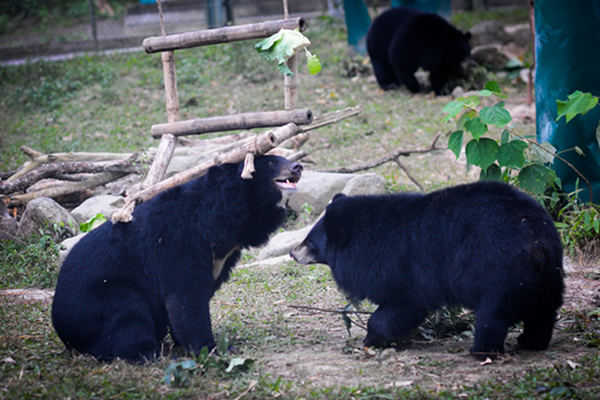 It Takes a Village to End Bear Bile Farming: Animals Asia's Ray Zhu