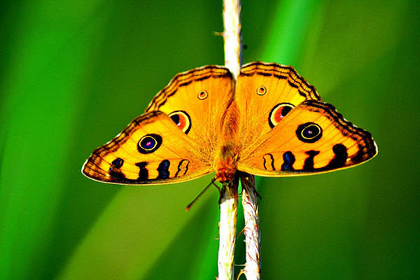 9,000 Butterflies Die for Art