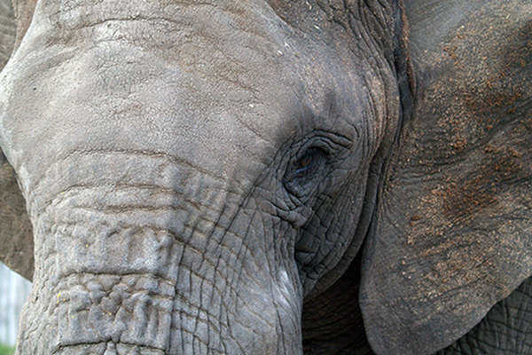 Los Angeles Takes Steps to Ban Circus Elephants