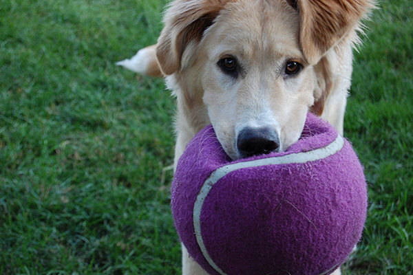 10 Eco-Friendly Toys for Dogs