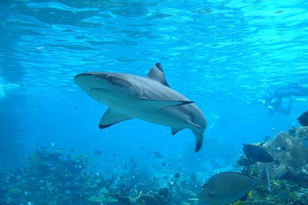 European Parliament Votes for Stronger Shark Finning Ban