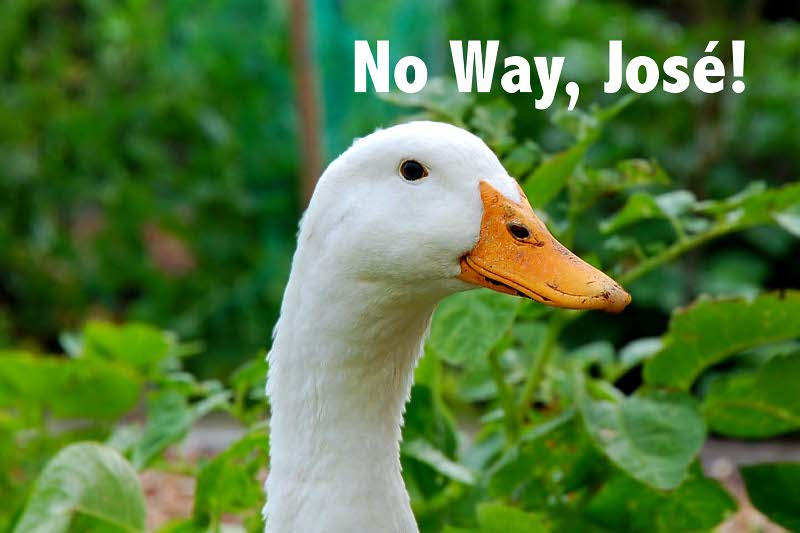 8 Good Reasons to NOT Eat Foie Gras