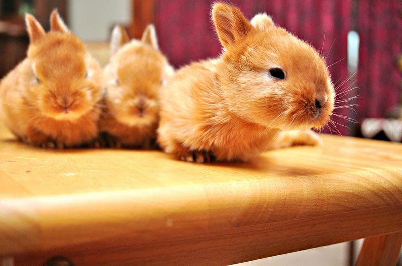 Rock Star Rescue Animals: 5 Adorable Rabbits
