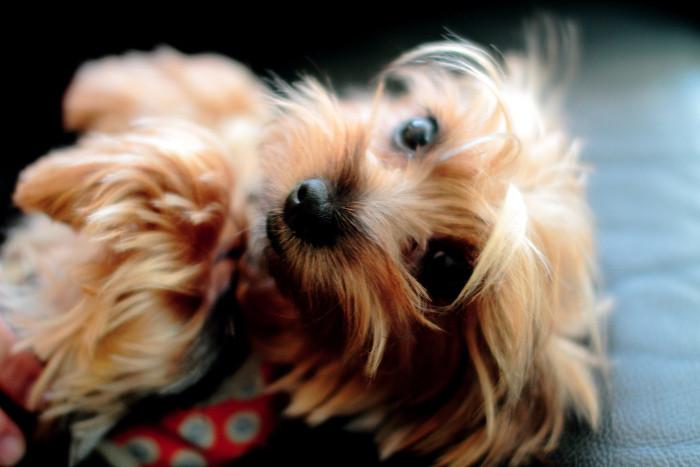 8 Fun Eco-Friendly Hemp Toys for Your Pet