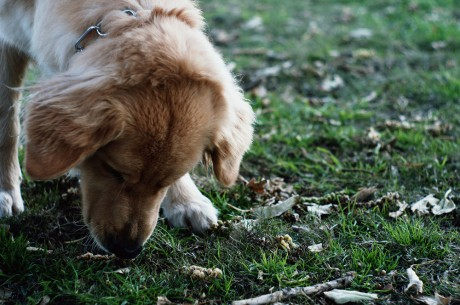 5 Fruits and Veggies That are Toxic to Your Dog