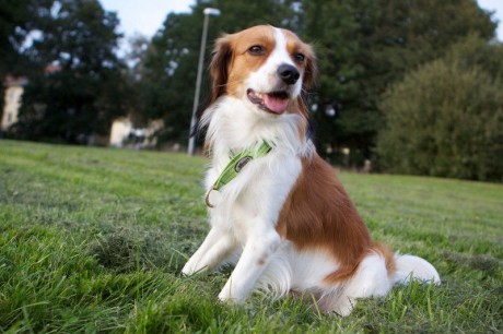 8 Fruits and Vegetables to Keep Your Dog Happy n' Healthy
