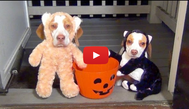 Dogs Trick or Treating on Halloween