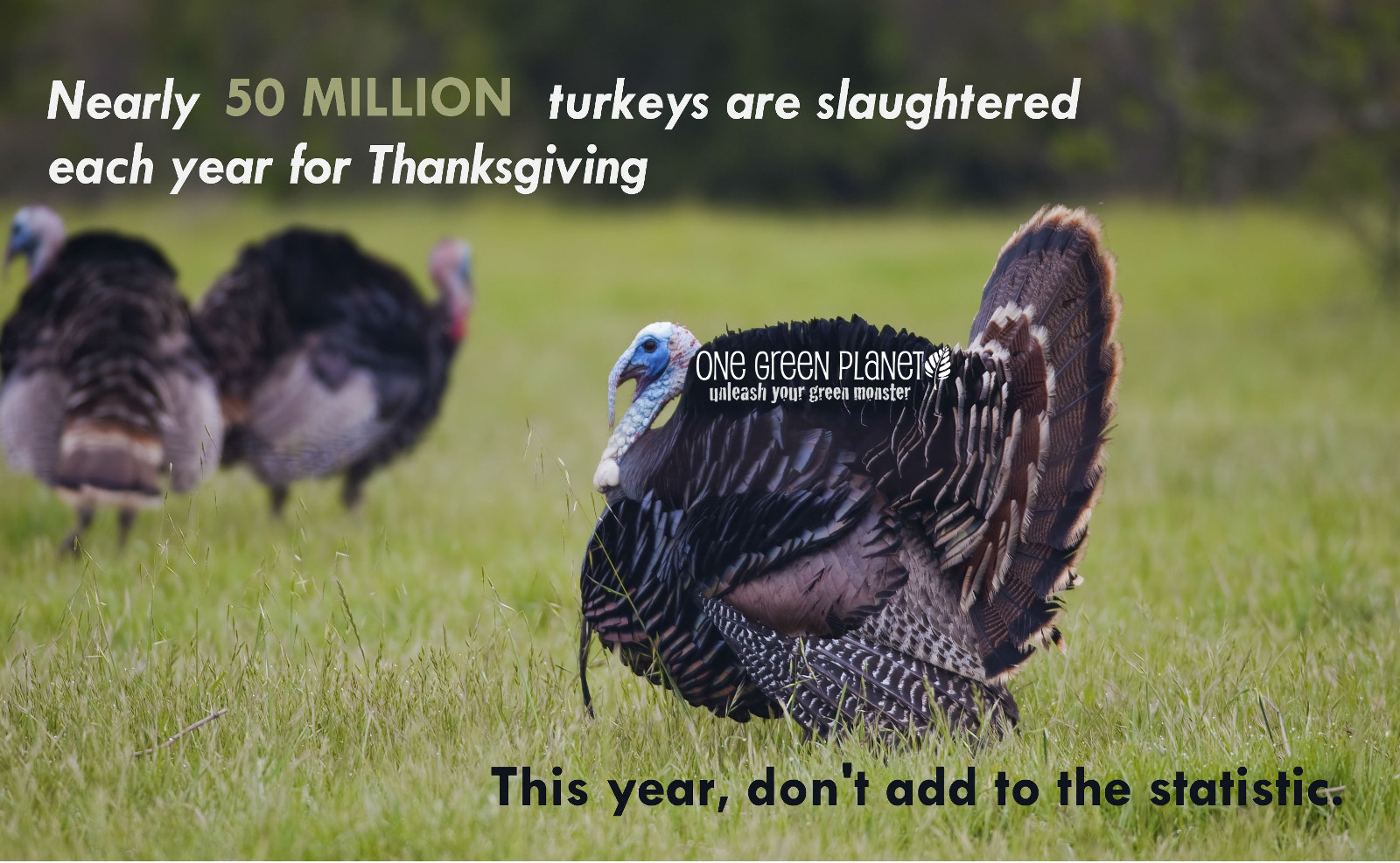 50 Million Reasons to NOT Eat Turkey this Thanksgiving