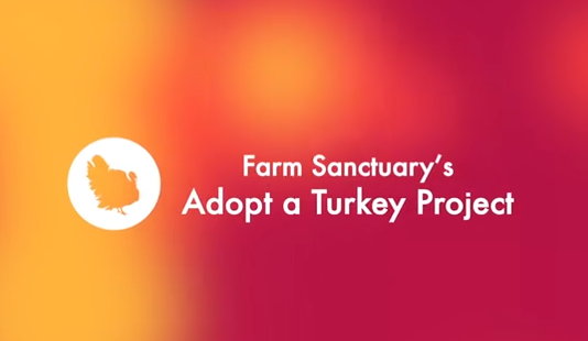 Celebrate Turkeys this Thanksgiving with Farm Sanctuary's Adopt a Turkey Program
