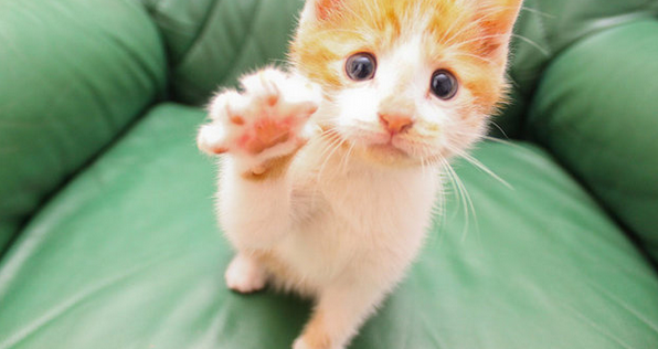 Funny Cats Giving High Fives (VIDEO)