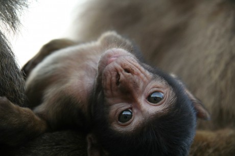 10 Primate Sanctuaries Around the World That Need Your Support