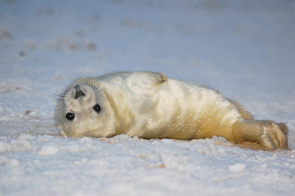 5 Reasons Seals Should Not Be Hunted