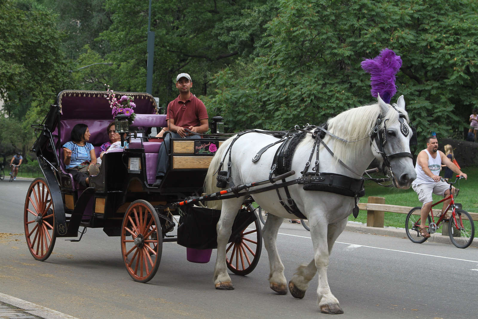 NYC Horse Carriages Finally On the Way Out!