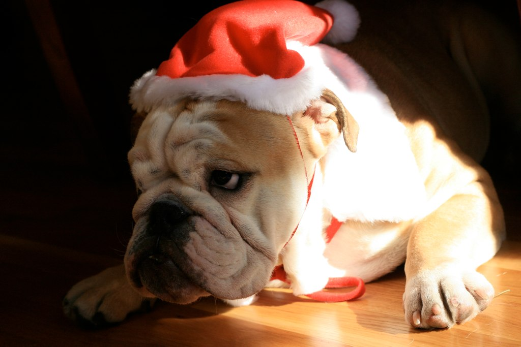 How to Make Christmas Themed Treats for Your Furry Companions