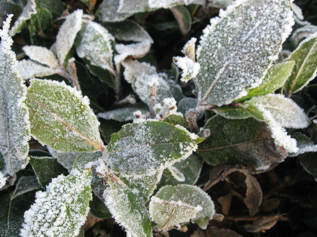 How to Protect Plants from Cold Temperatures