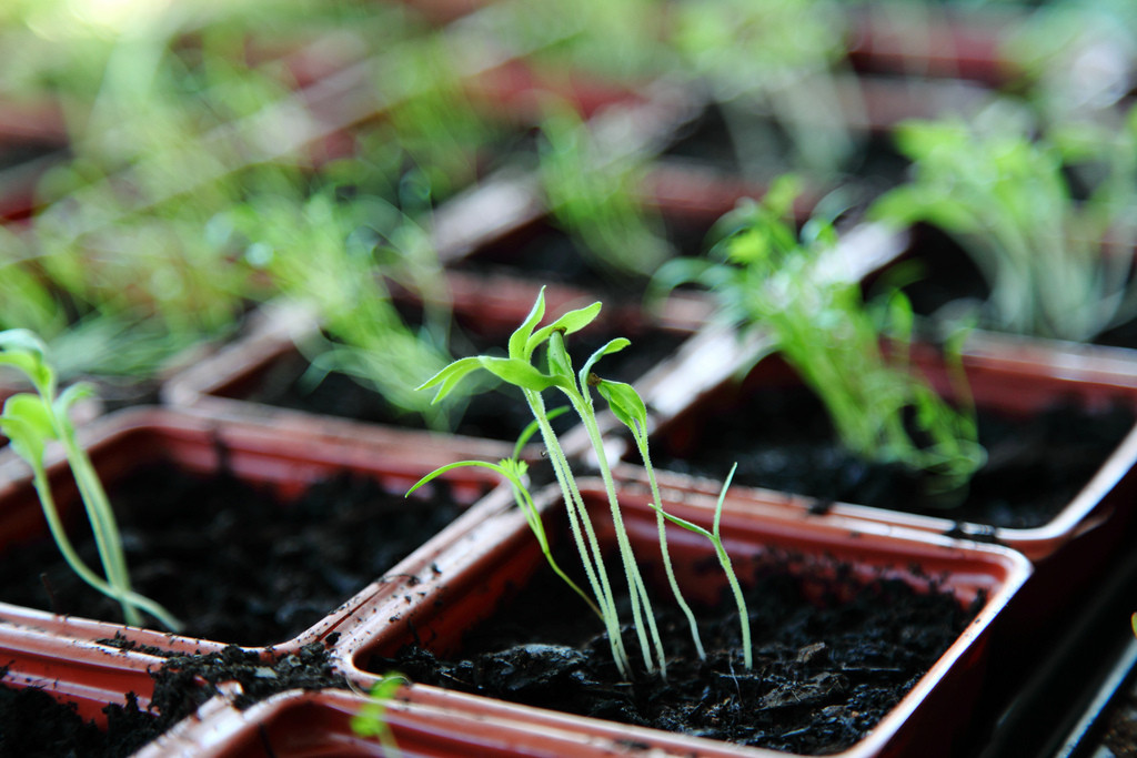 Surprising Ways to Go Green in the New Year