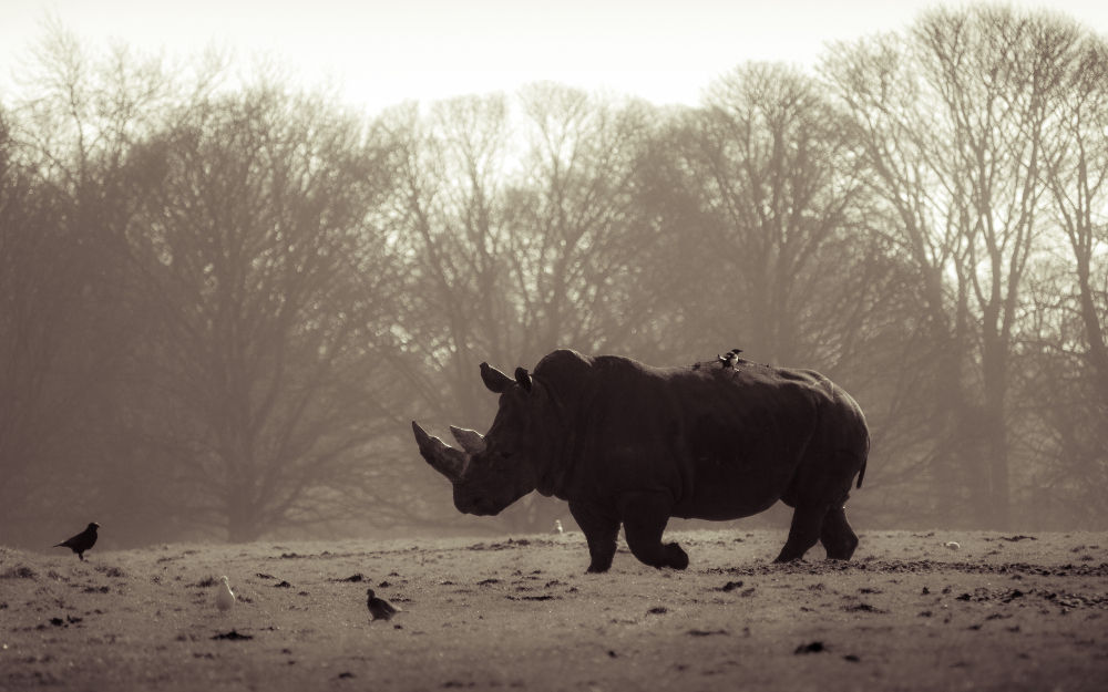 The Devasting Effects of Wildlife Poaching