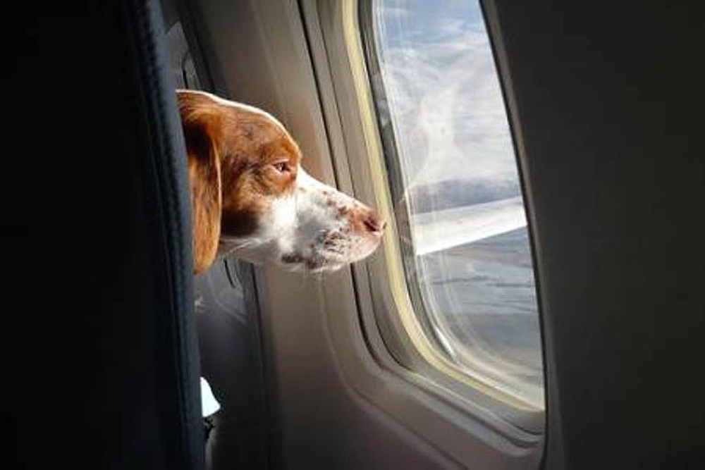 Tips for Traveling with Pets Around the Holidays