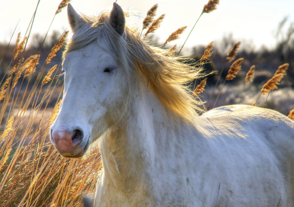 Why Horses Desperately Need Your Help TODAY