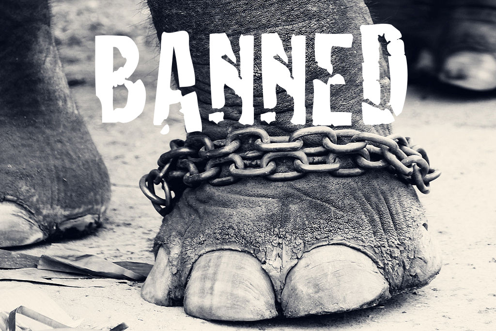 These 5 Barbaric Animal Uses are Now Banned. What's Next?