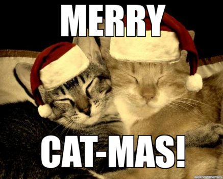5 Cat-Tastic Videos Just in Time for Christmas