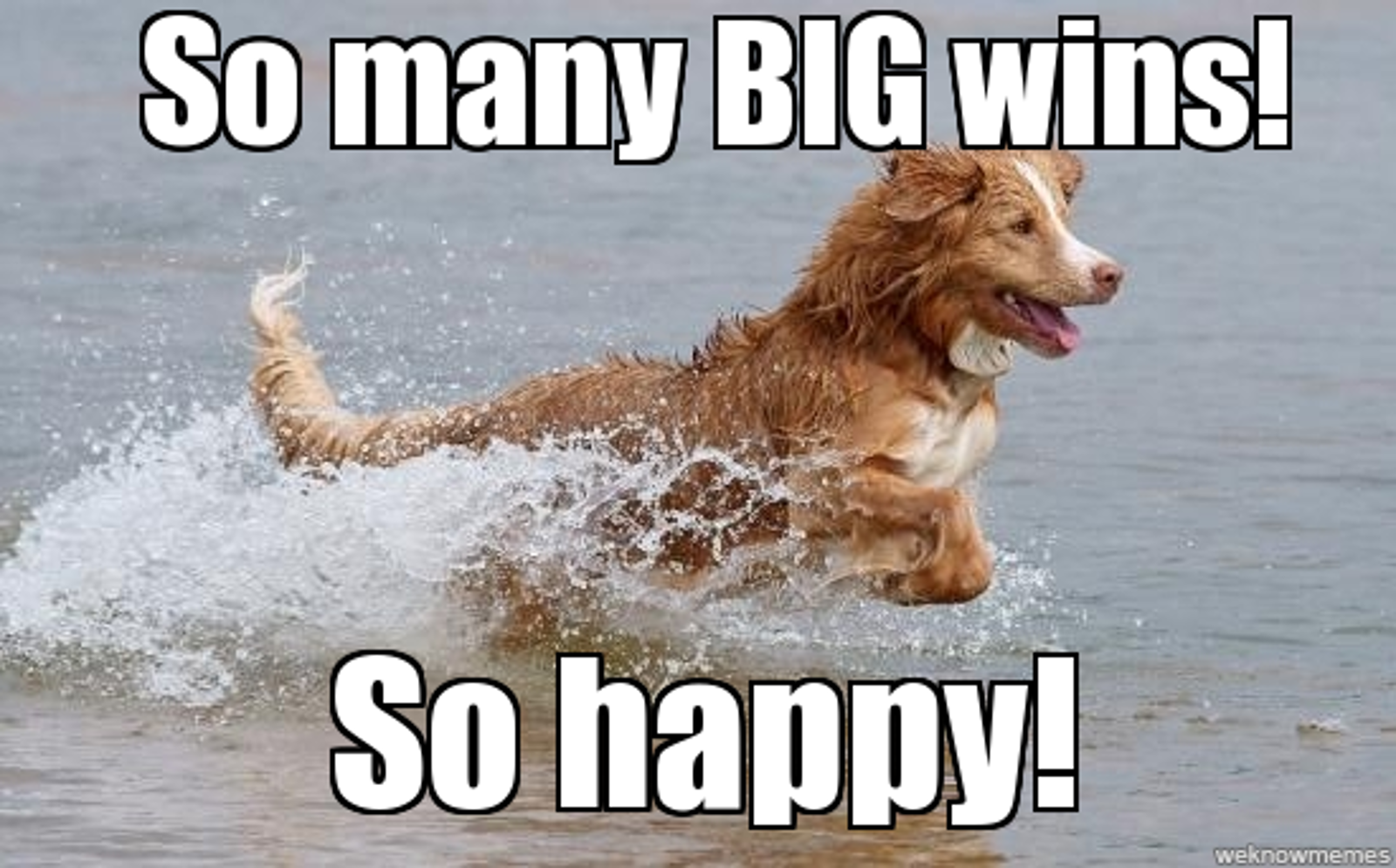 13 Big Wins for Animals in 2013