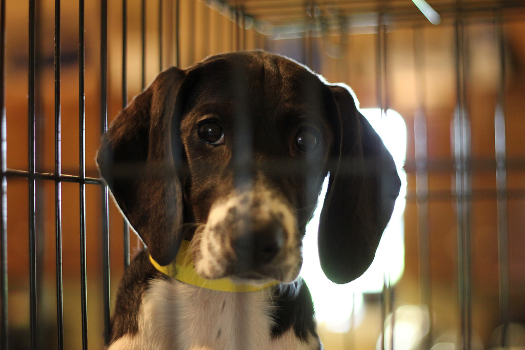 10 Amazing No-Kill Animal Shelters in the U.S.