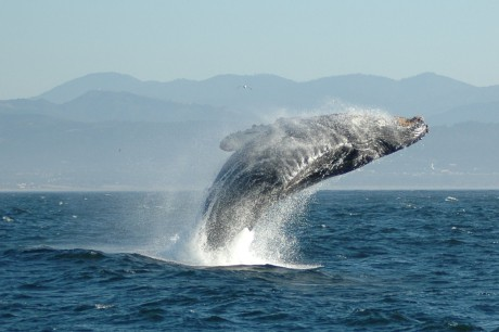 5 Alarming Facts About Whaling