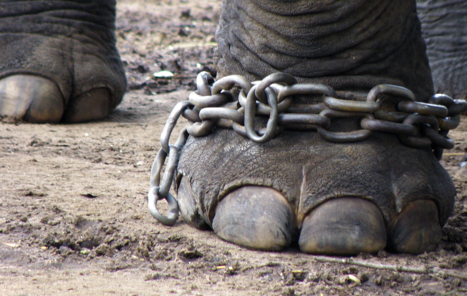 5 Reasons Why Animal Circuses in the U.S. Need to be Banned NOW!