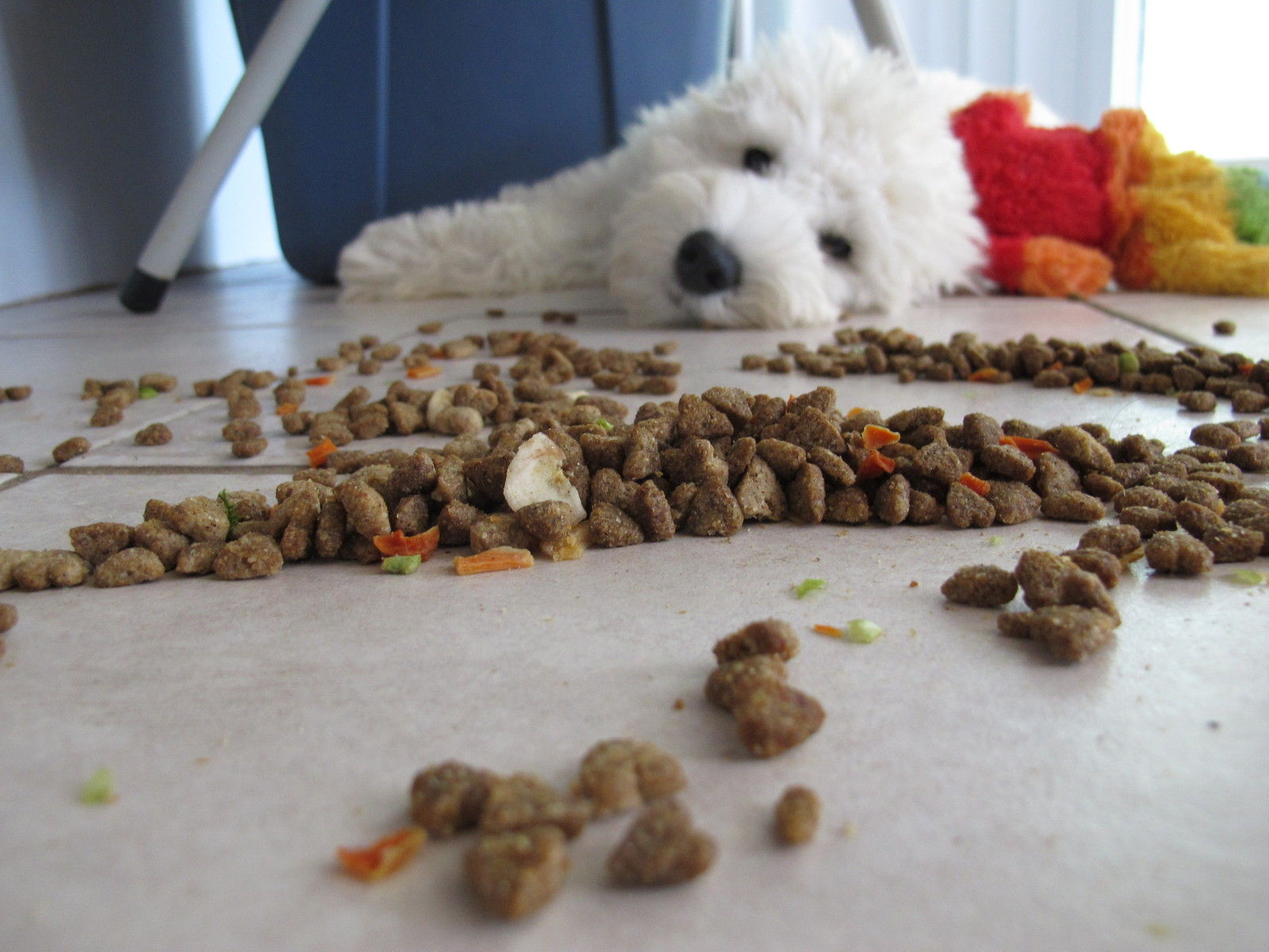 6 Healthy People Foods to Jazz Up Your Dog's Commercial Food