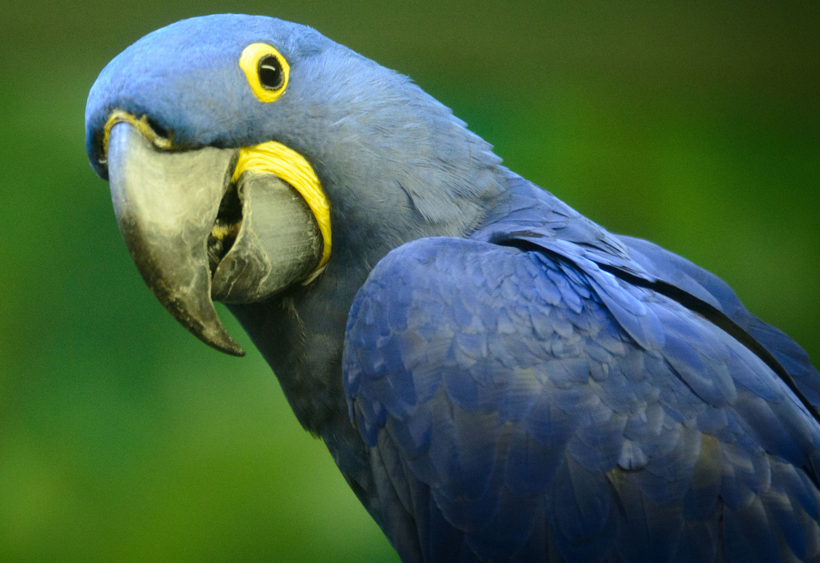 7 Things You Never Knew About the Exotic Bird Trade and How You Can Help