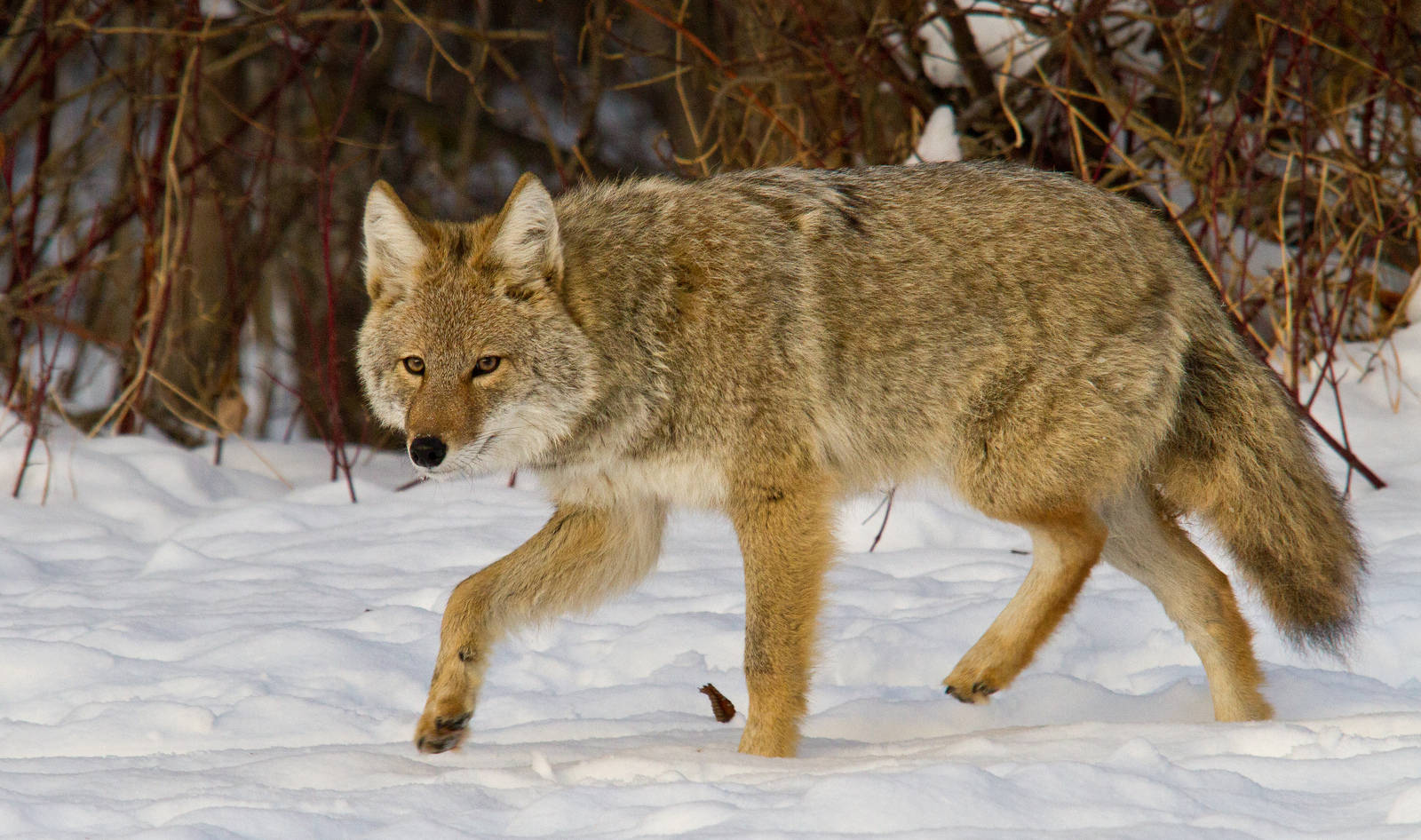 5 Ways U.S. Wildlife Services is Ineffective
