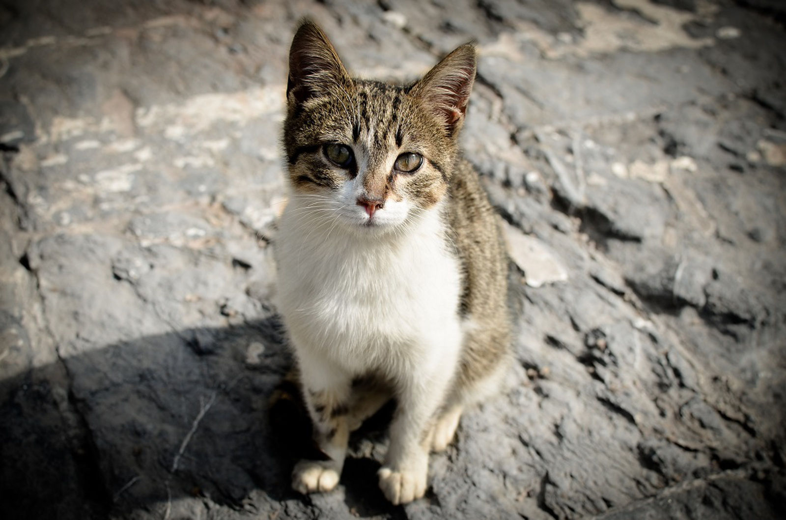 Get Involved to Improve the Lives of Feral Cats Through Trap-Neuter-Return