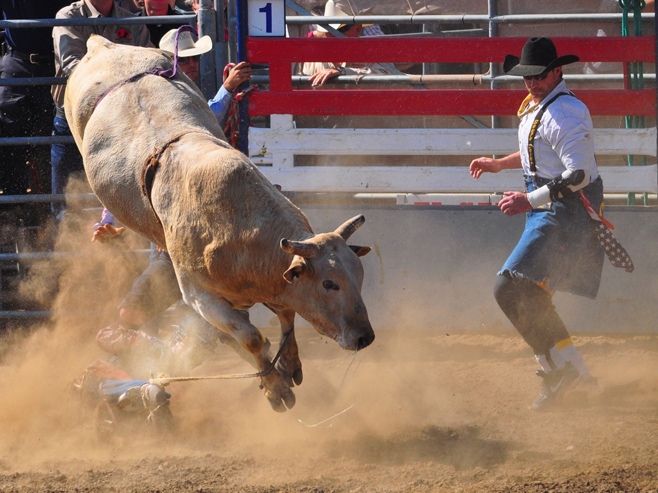 How Bulls Continue to be Abused in the Name of Tradition