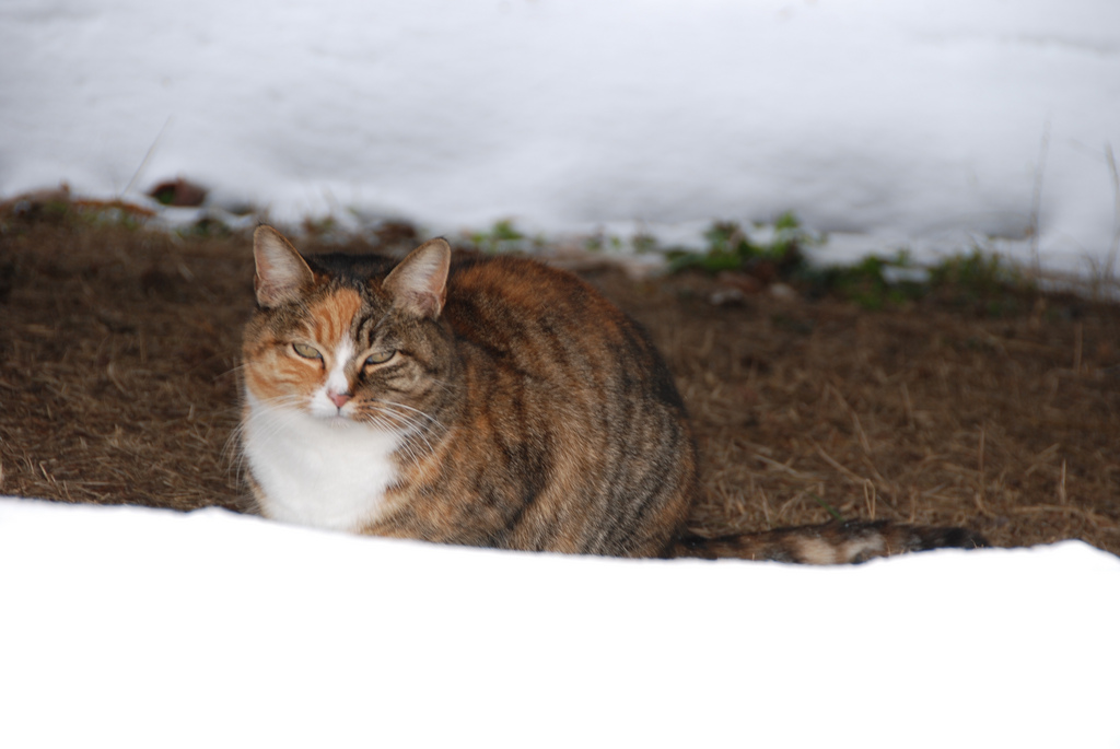 How to Care for Neighborhood Feral Cats During the Winter
