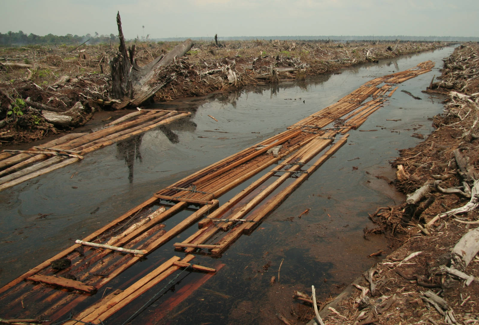 The Problem With Palm Oil, And What You Can Do About it