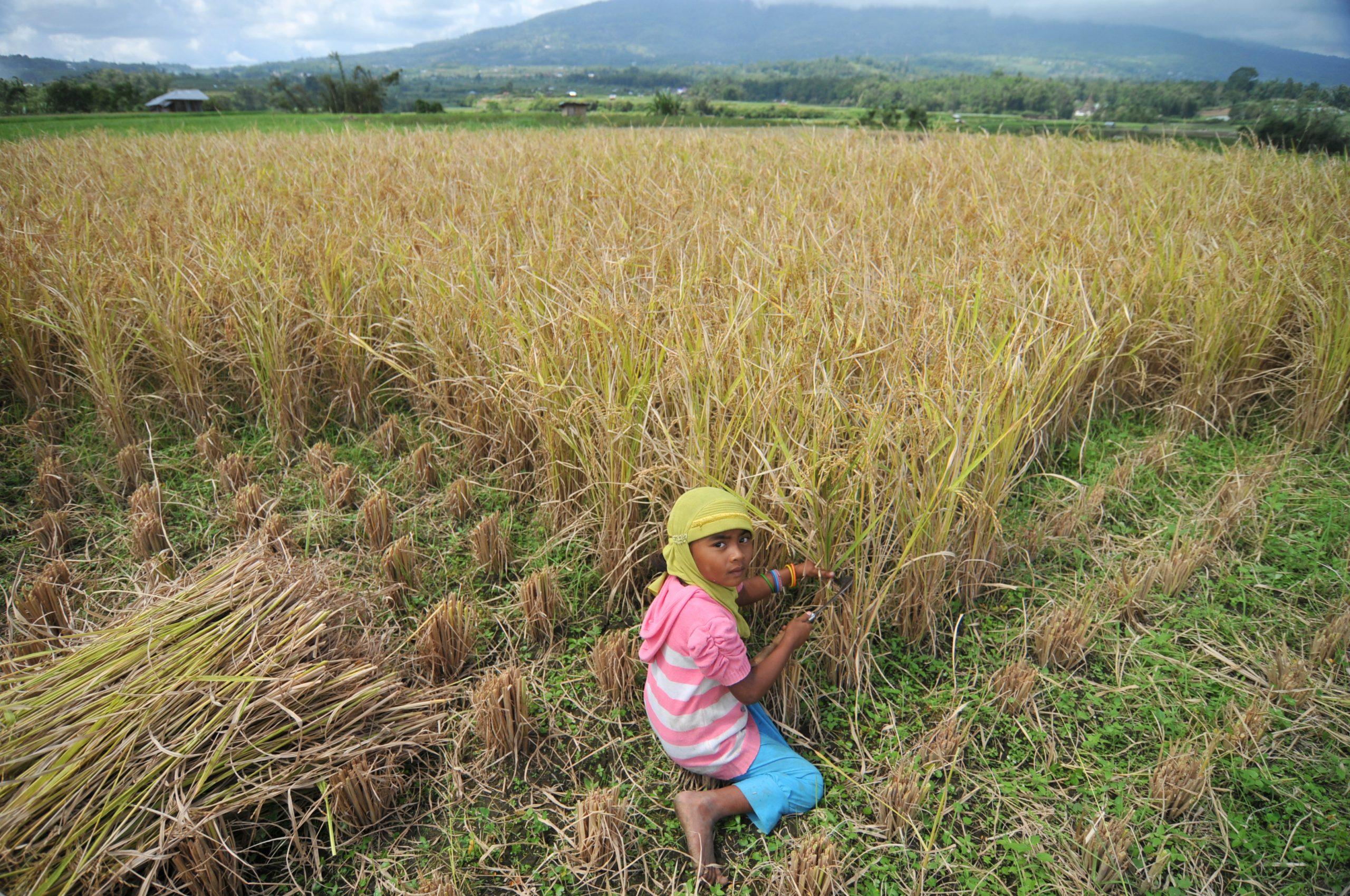child labor fields